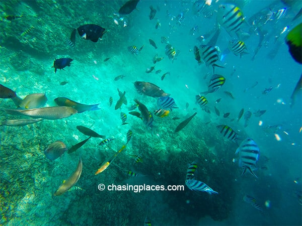 The magnificent underwater world of the Gili Islands